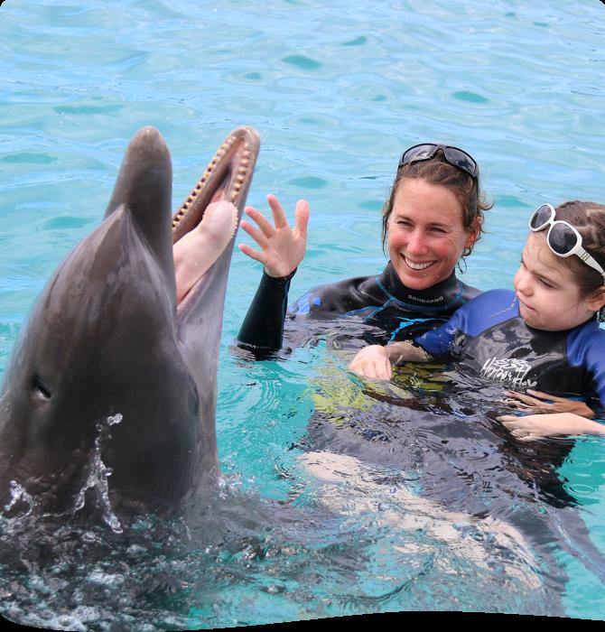 Dolfijntherapie op Curaçao